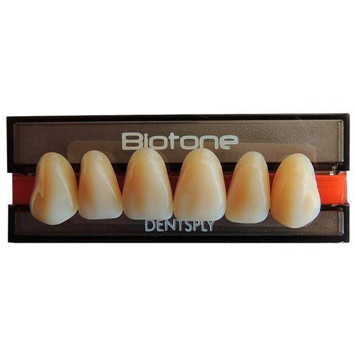 VENC 10/21 Dente Biotone Anterio Superior - Dentsply